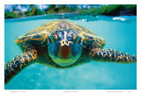 Honu, Hawaiian Sea Turtle