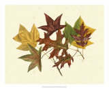 Tulip Tree, Sweet Gum and Scarlet Oak