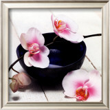Orchid in a Bowl Framed Art Print