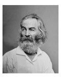 Walt Whitman American Poet, Author, and Journalist in Portrait from Mathew Brady Studio, 1863