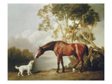 Bay Horse and White Dog