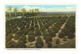 Orange Grove, Florida