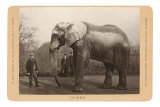 Photo of Jumbo the Elephant