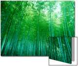 Buy Bamboo Forest, Sagano, Kyoto, Japan at AllPosters.com