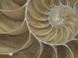 Details of a Sectioned Chambered Nautilus Shell (Nautilus), South Pacific Ocean