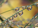 Autumn Leaves Reflected in Raindrops on Blades of Grass, Acadia National Park, Me