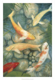 Buy Reflecting Koi II at AllPosters.com