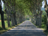Empty Tree Lined Road on the Route De Vins, Near Vaucluse, Provence, France, Europe