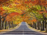 Memorial Avenue in Autumn, Mount Macedon, Victoria, Australia, Pacific