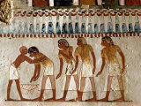 Harvesting Scene from the 18th Dynasty, Tomb of Menna, Tombs of the Nobles, Thebes, Egypt