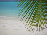 Palm Tree Leaf and Tropical Beach, Maldives, Indian Ocean
