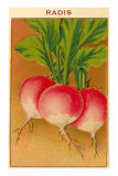French Radish Seed Packet