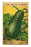 French Zucchini Seed Packet
