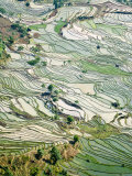 Flooded Laohu Zui Rice Terraces, Mengpin Village, Yuanyang County, Yunnan, China