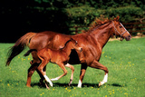 Buy Mare & Foal at AllPosters.com