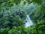 Ayung River Bends Through the Lush Dense Tropical Jungle
