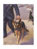 German Shepherd Works as a Seeing Eye Dog, Leading a Blind Man
