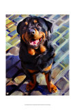 Handsome Rottie