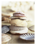 Colored Seashells