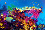 Buy Fish and Coral at AllPosters.com