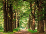 Buy Forest Path at AllPosters.com