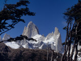 Santa Cruz Province, Cerro Fitzroy, in the Los Glaciares National Park, Framed by Trees, Argentina