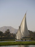 Feluccas Sailing on the Nile at Luxor, Egypt