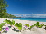 South Pacific, Fiji, Kadavu, Deserted Beach on the East Coast of Yaukuve Island