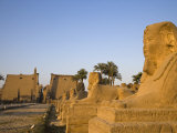 Avenue of Sphinxes Leading Up to Luxor Temple, Egypt