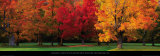 Buy Maple Trees in Autumn, White Mountains, New Hampshire at AllPosters.com