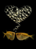 Tetra Fish Blowing Bubbles in Heart Shape