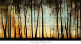 Buy Golden Forest at AllPosters.com