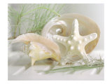 Buy Cali Starfish IV at AllPosters.com