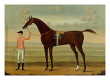 A Bay Racehorse with his Jockey on a Racecourse