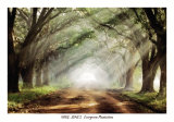 Buy Evergreen Plantation at AllPosters.com