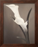 Callas Framed Art Print