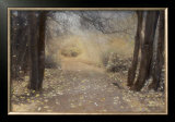 Silent Path Framed Art Print