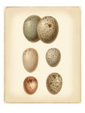 Bird Egg Study IV Giclee Print