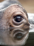Eye of Hippo at Season Opening of Zoom Erlebniswelt Adventure Park in Gelsenkirchen, Germany