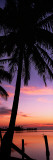 Buy Silhouette of Palm Trees at Dawn, Pine Island, Lee County, Florida, USA at AllPosters.com