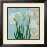Paperwhites on Blue I