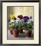 Pansies in Flower Pots