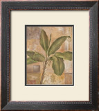Tropical Spirit I Framed Art Print
