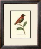 Crimson Birds I