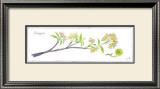 Crabapple Branch