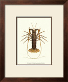 Antique Lobster IV
