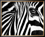 Black & White II (Zebra) Framed Art Print