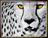 White Cheetah Framed Art Print