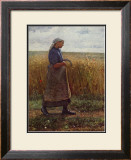 Summer Harvest Framed Art Print