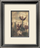 Tinted Tulips III Framed Art Print
